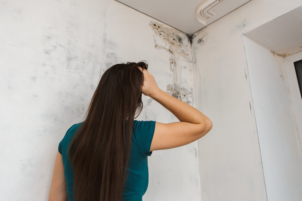 Mold loves humidity above 55-60%.  – US Environmental Protection Agency  www.epa.gov