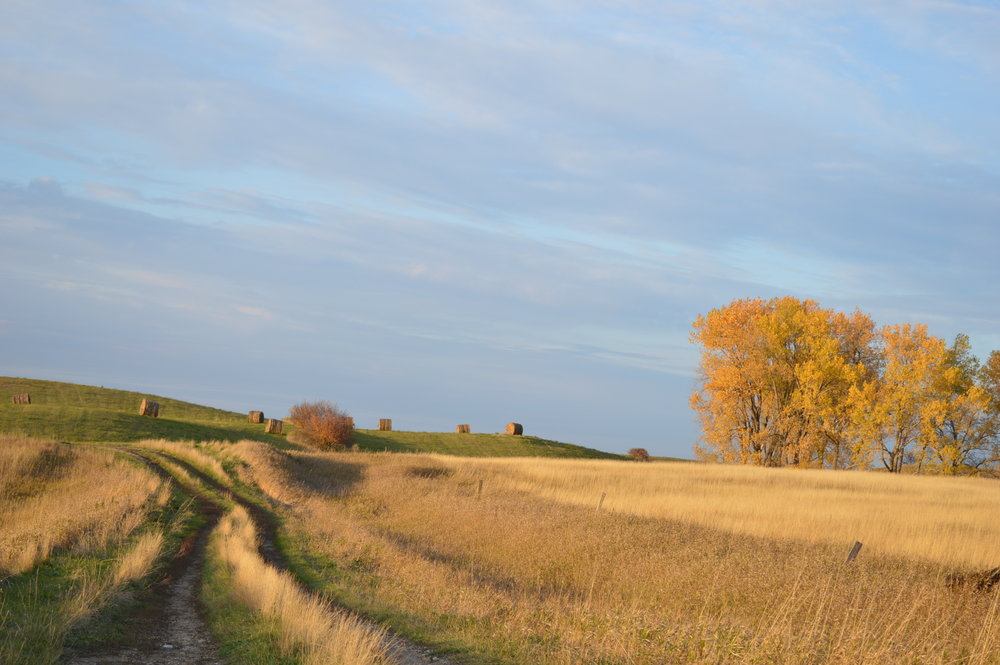 WINDFALL - The story of a prairie legacy.