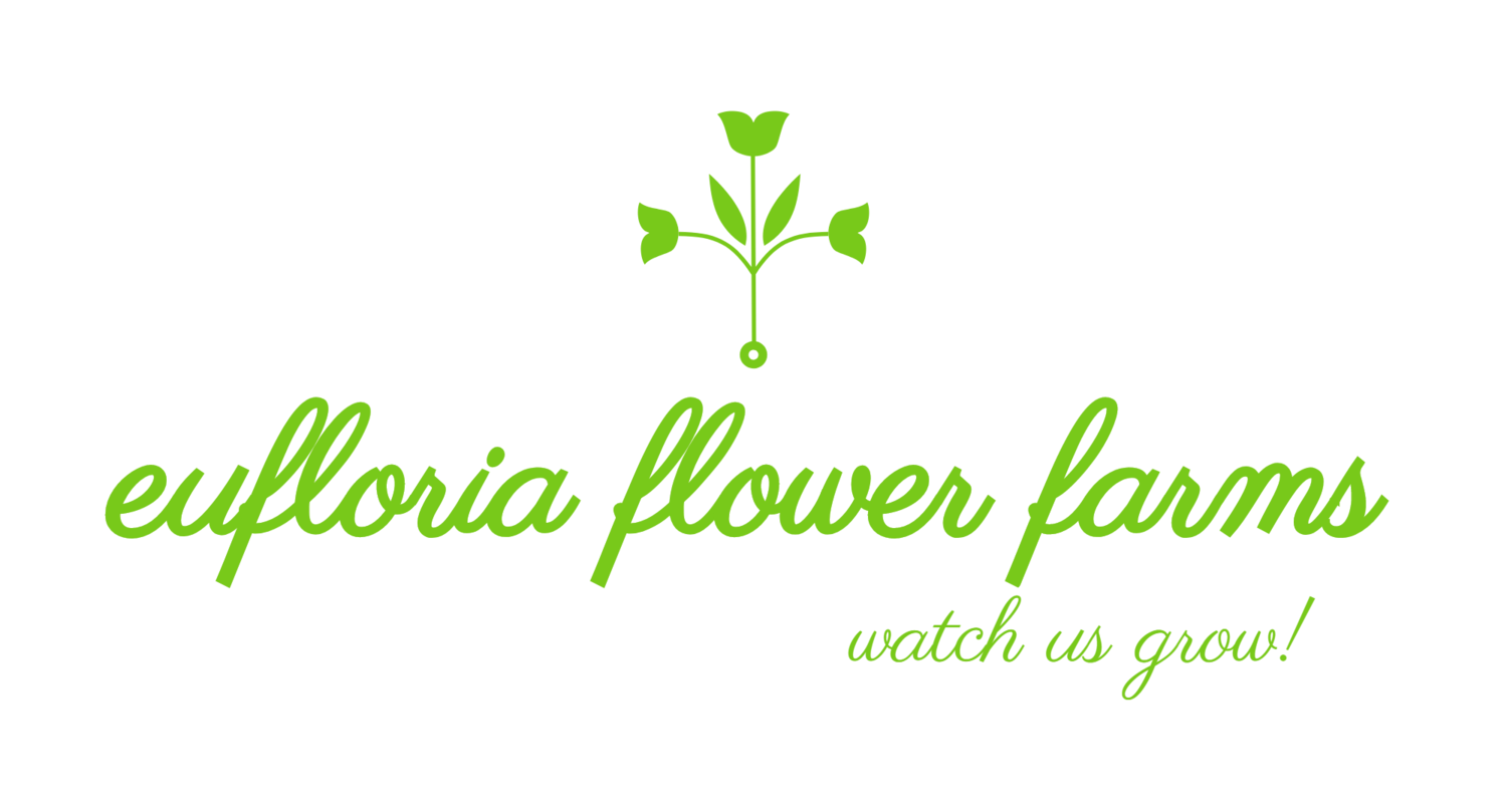 eufloria flower farms