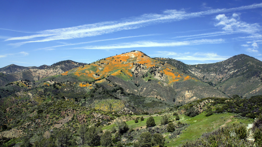 Santa Ynez Valley Visitor Information - Learn more here!