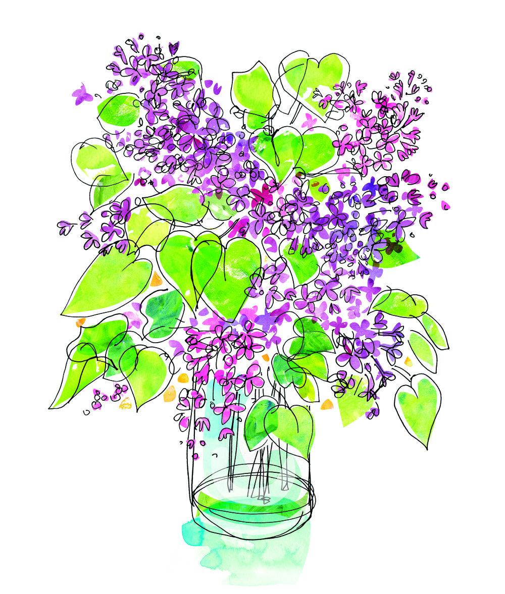 Lilac Spot Illustration