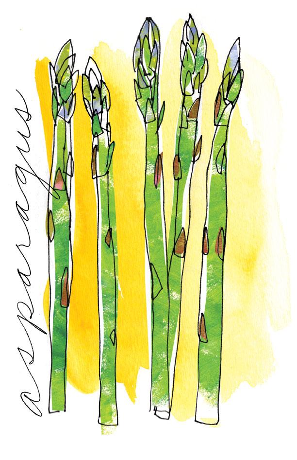 Asparagus spot illustration