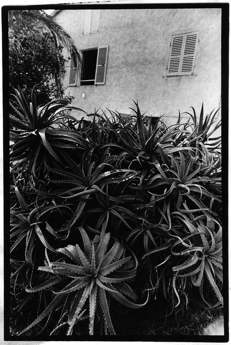 Maison Corse.jpg
