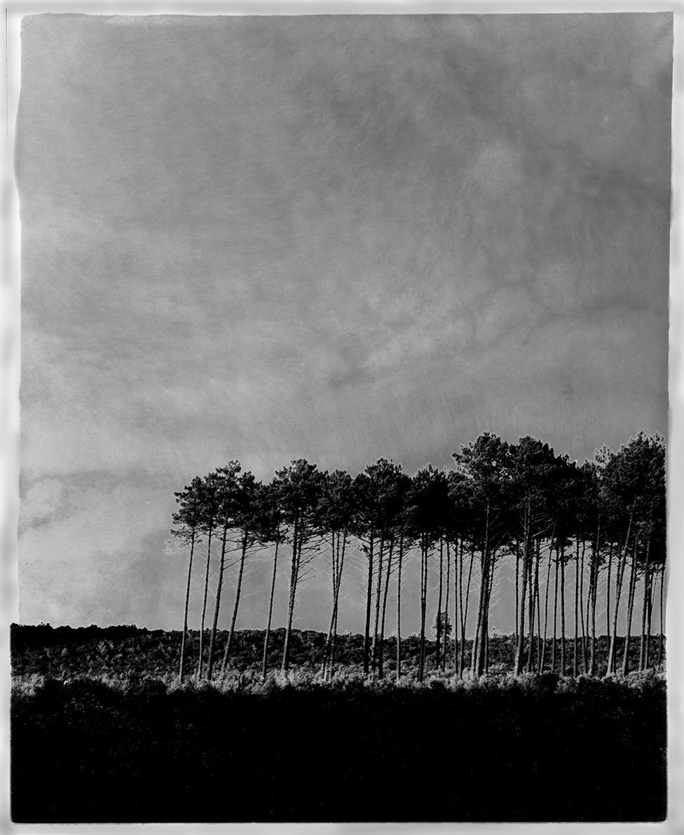 Paysage Landes sol.jpg
