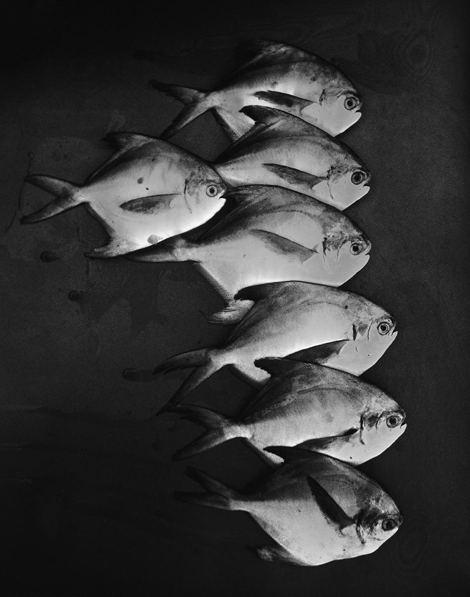 poissons Varkala.jpg