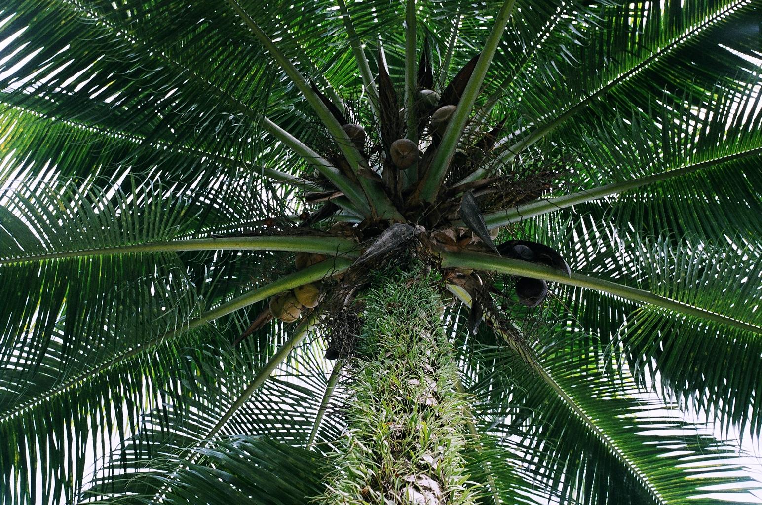 Palm. NH