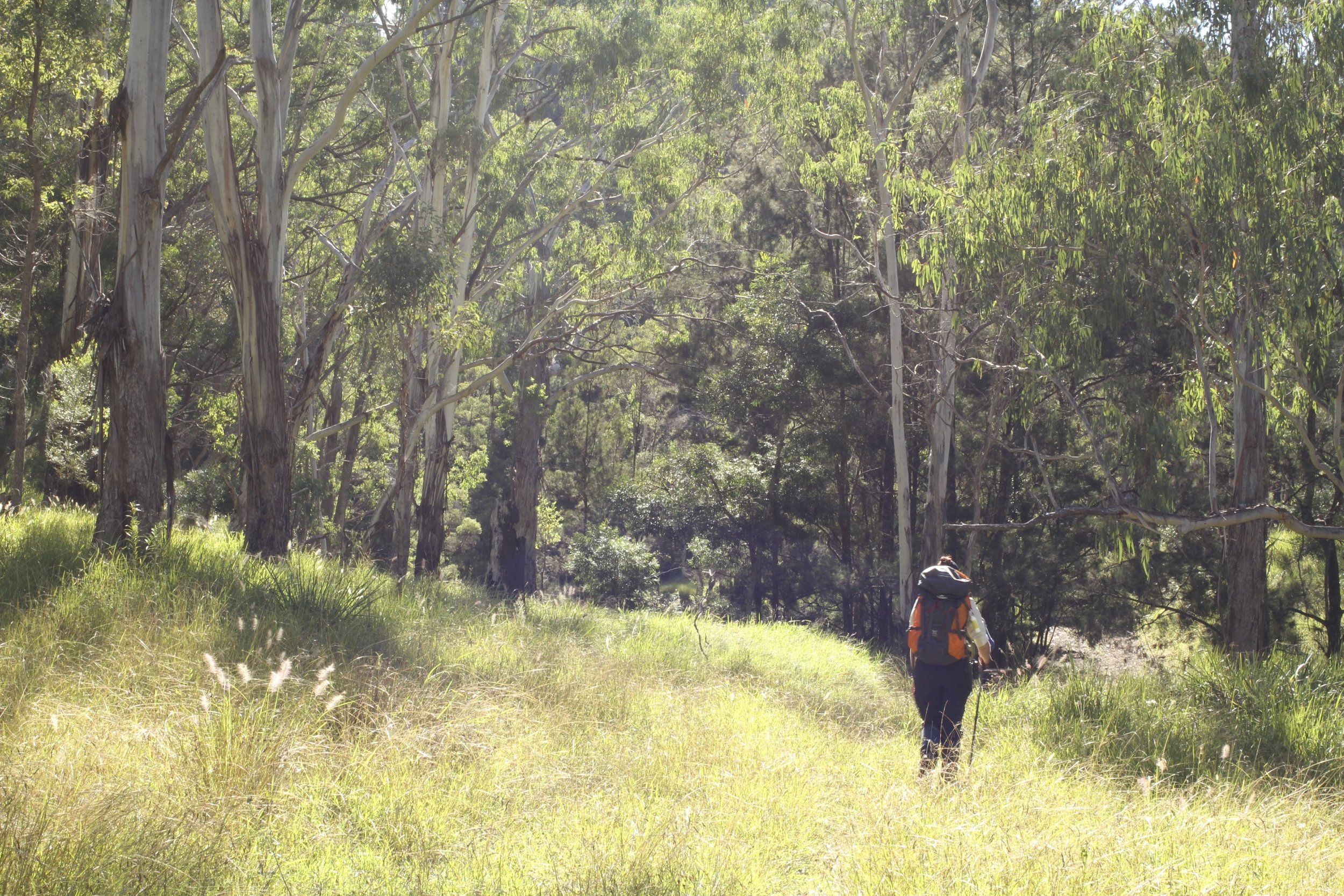 Scenic Rim Trail