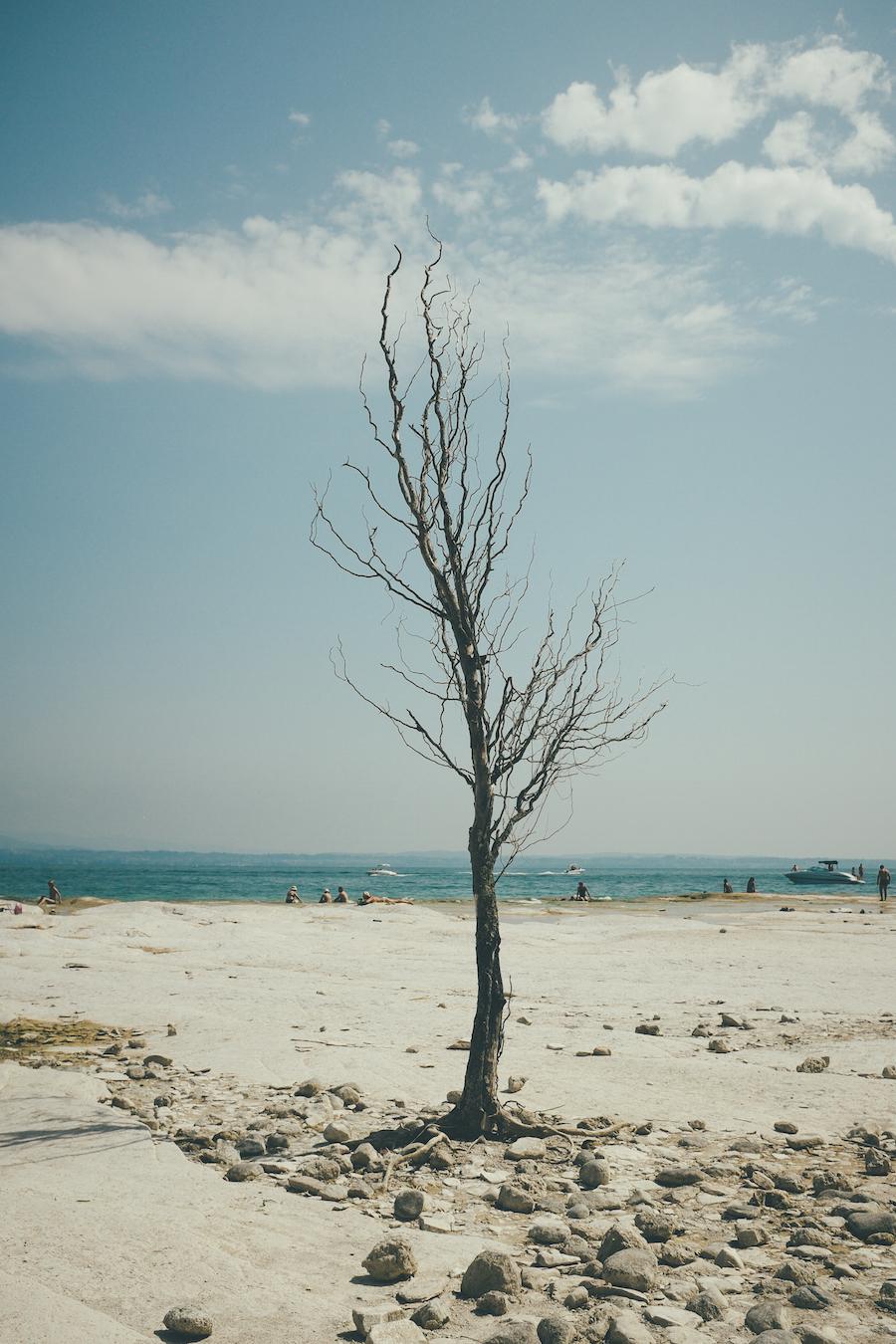 Sirnione Tree