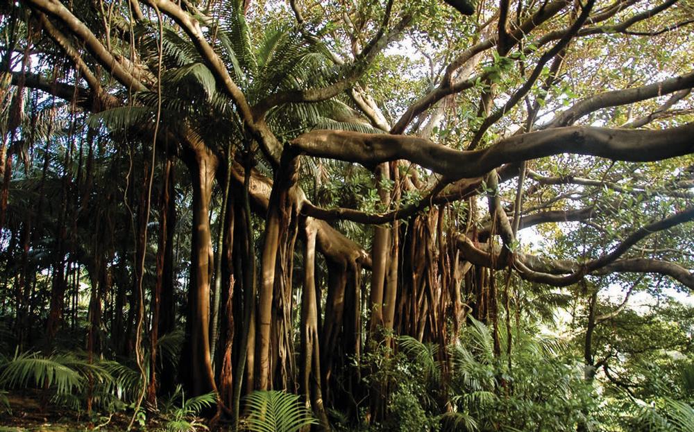 Paradise-Found-Lord-Howe-Island_4.jpg