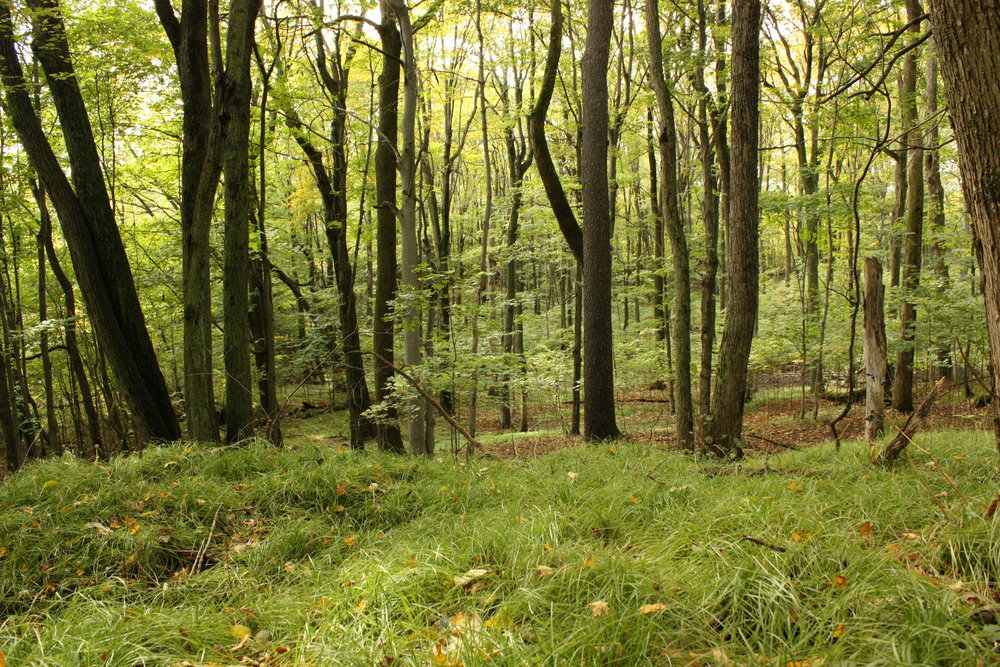 Healthy ecosystems, such as this forest, have structure which we can mimic in the garden for many benefits.