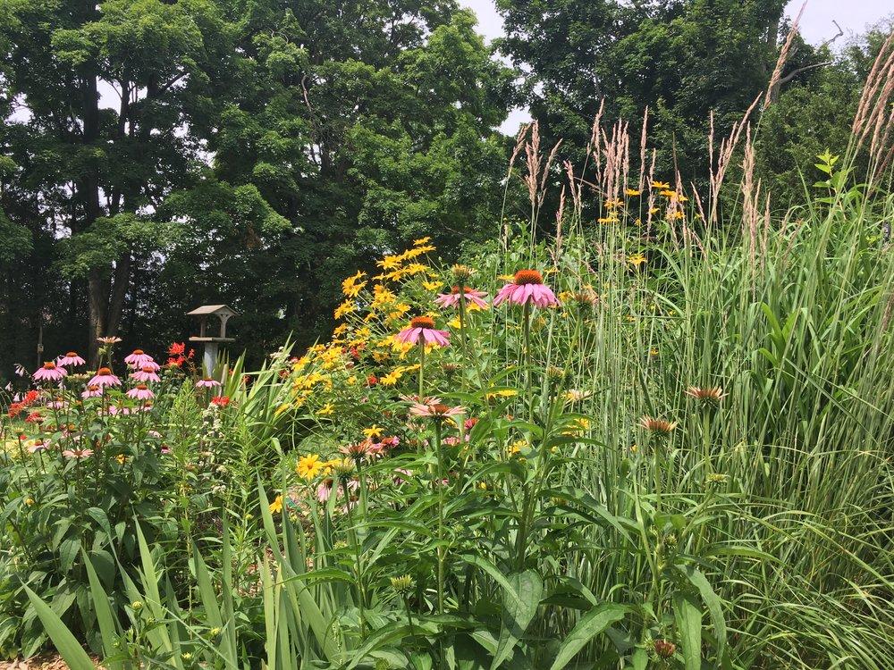 Native Plants 101 -