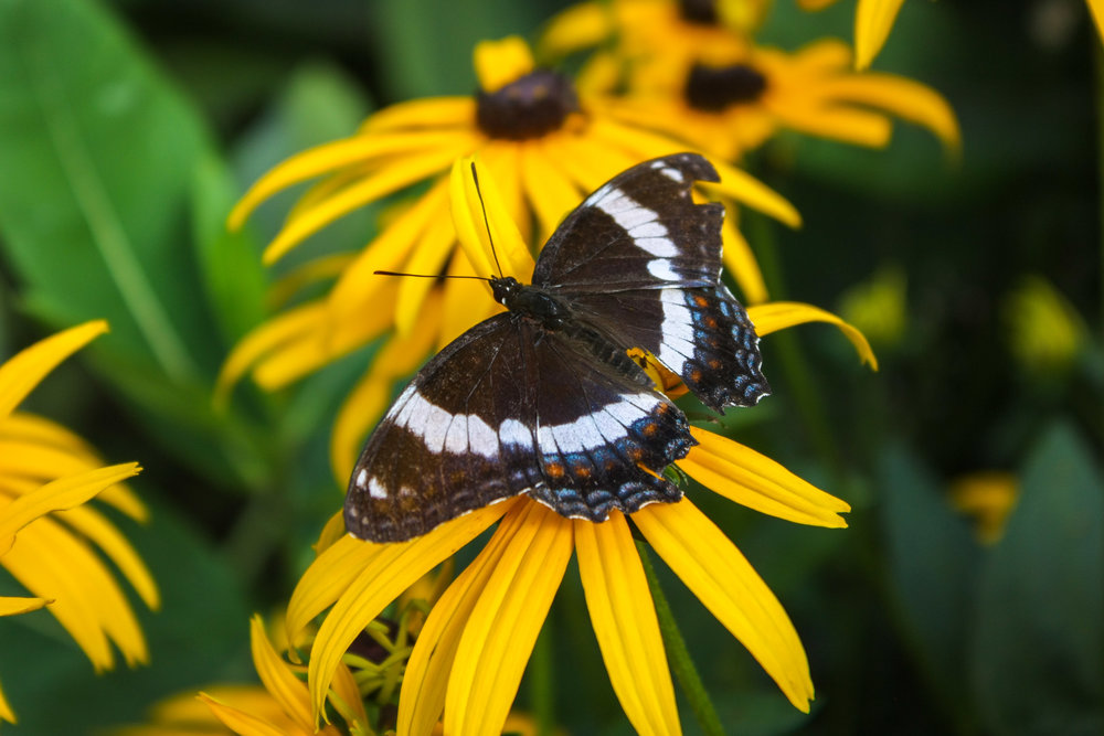 Native plants provide the habitat that wildlife need to survive.