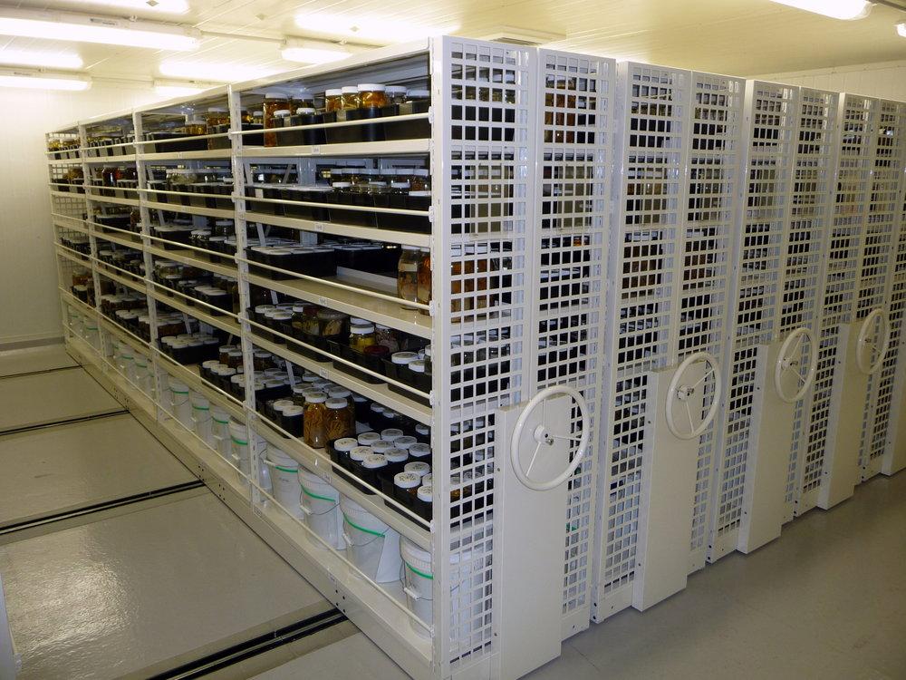 Longspan on Mech Asst Mobiles -125.JPG