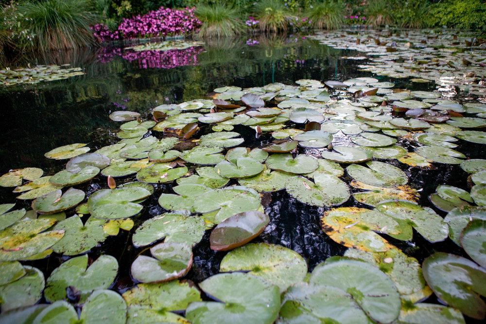 20120829-Giverny Garden-26.jpg