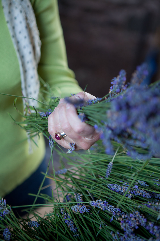 welsh lavender-8 10-42-49.jpg