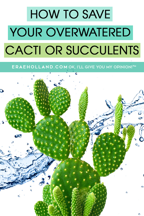 How To Save Your Overwatered #Cacti or #Succulents