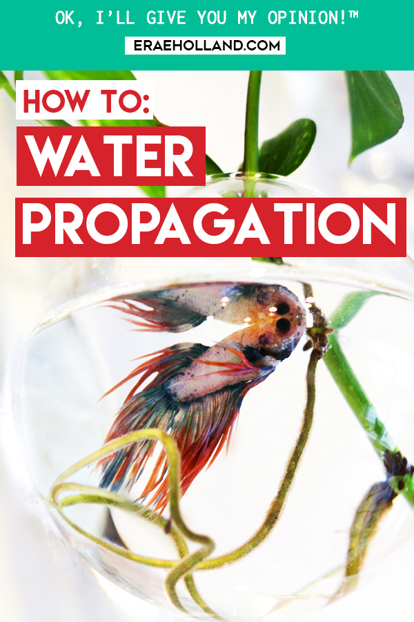 water-propagation-indoor-gardening.jpg