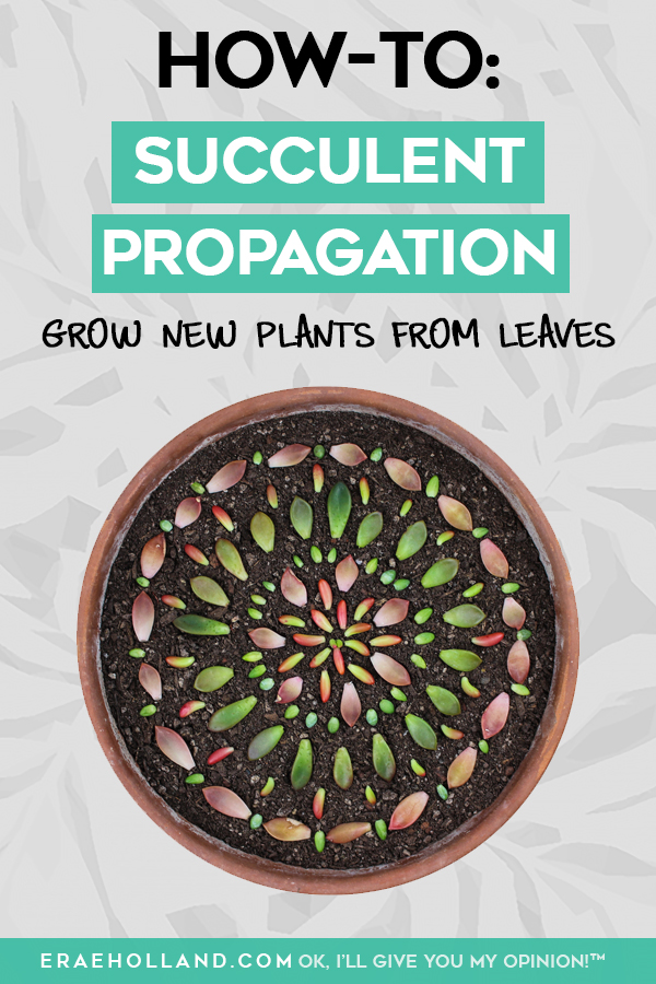 succulent-propagation-leaves.jpg