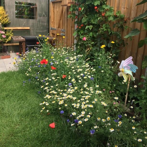 A happy Beebomb customer's garden