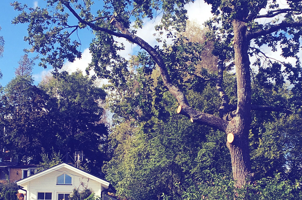 Avlastningsbeskärning - Beskärning av hela eller delar av träds krona för att förebygga stam- eller grenbrott.