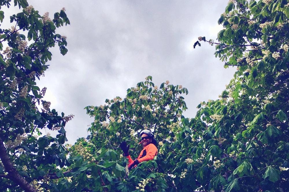 Satellitmottagning - Då grenar skymmer inkommande signaler till satellitmottagare kan det behövas beskärning. Vi hjälper er att ta bort de grenar som är i vägen. Viktigt att det finns tillstånd från eventuellt berörda grannar.
