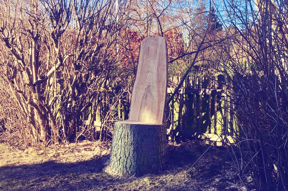 Konungastol - Ibland tas träd ner där stubben står förträffligt för att tjäna sina sista år som något värdefullt. En mäktig tron kan vara en sådan idé..