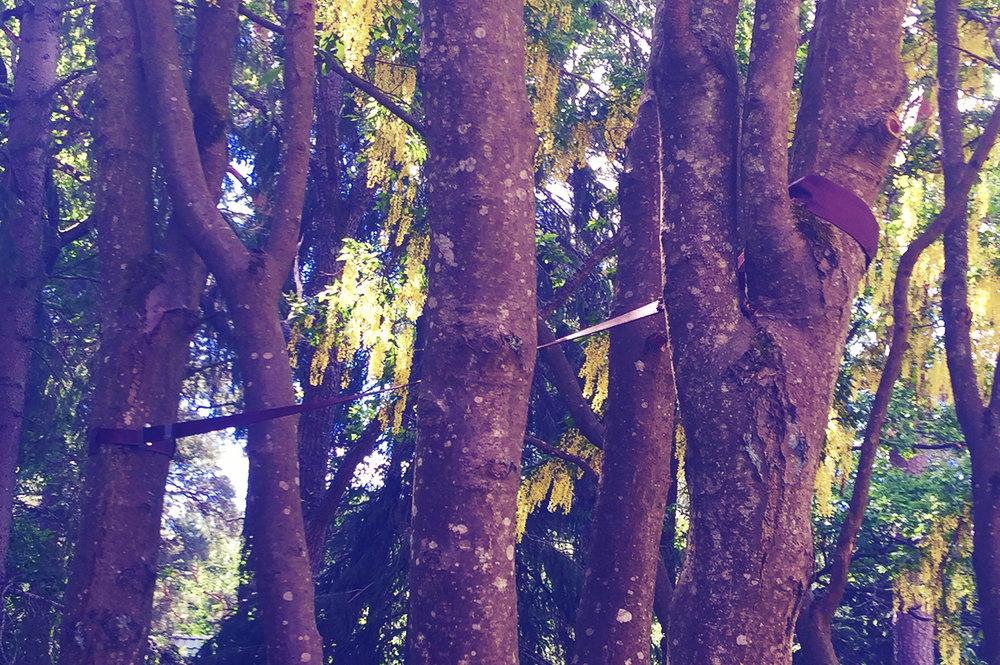 Kronstabilisering - System som installeras i trädkronan för att förhindra okontrollerat stam- eller grenbrott vid extrema rörelser.