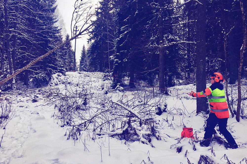 Ledningsröjning - Åtgärd för att säkerställa angivet avstånd mellan träd och strömförande luftledning.