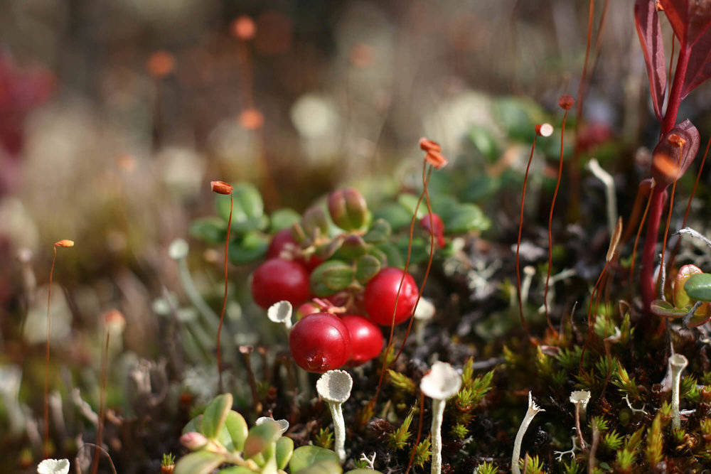 Fungi and Lichen.JPG