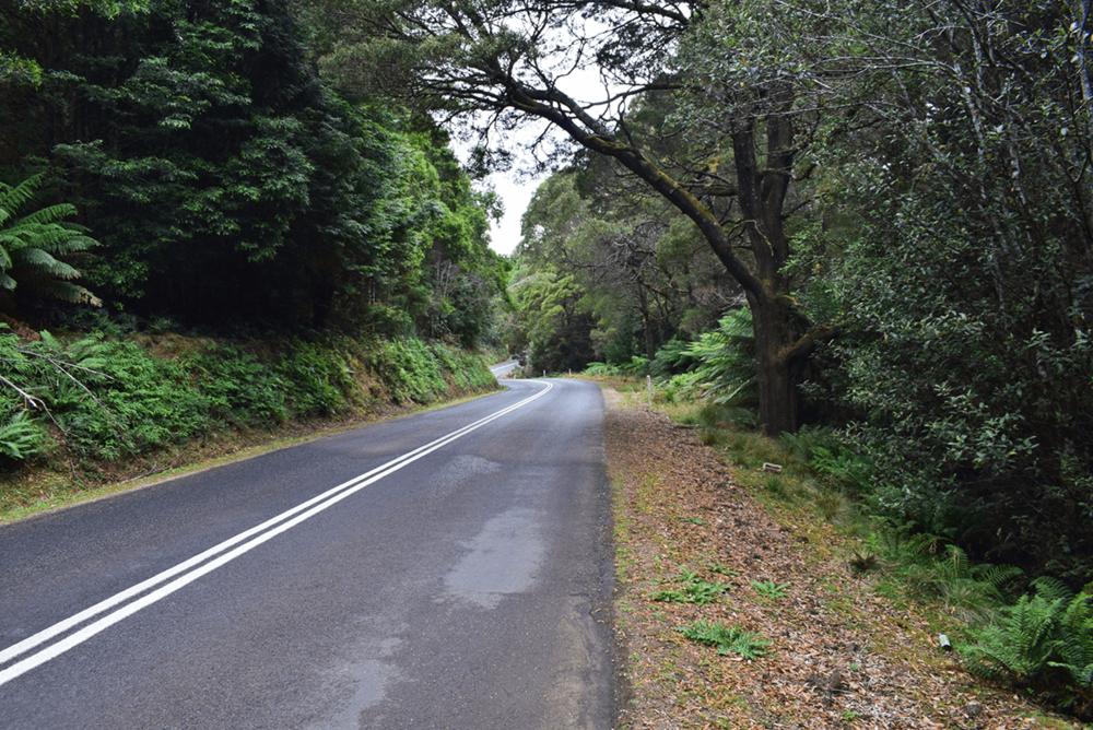 Road to Waratah.
