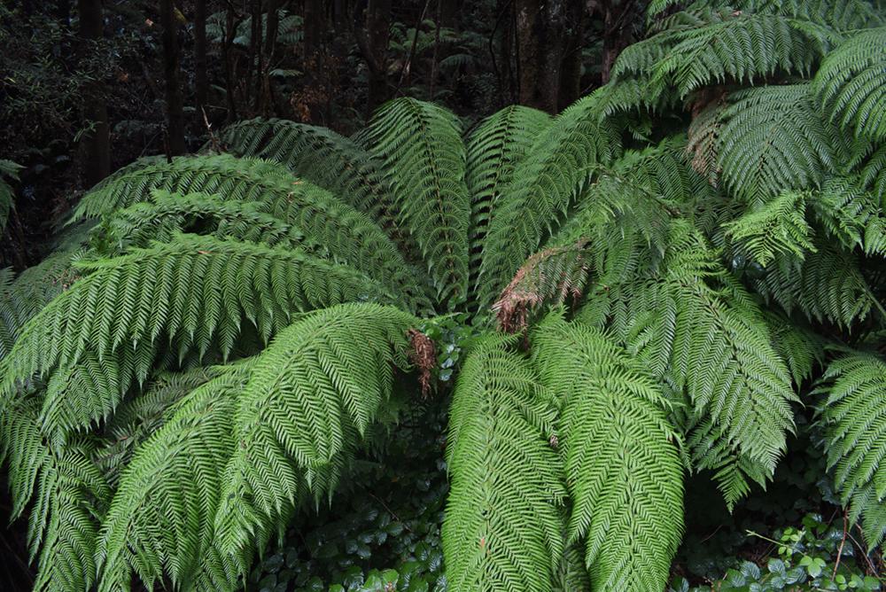 The Tarkine rainforest.