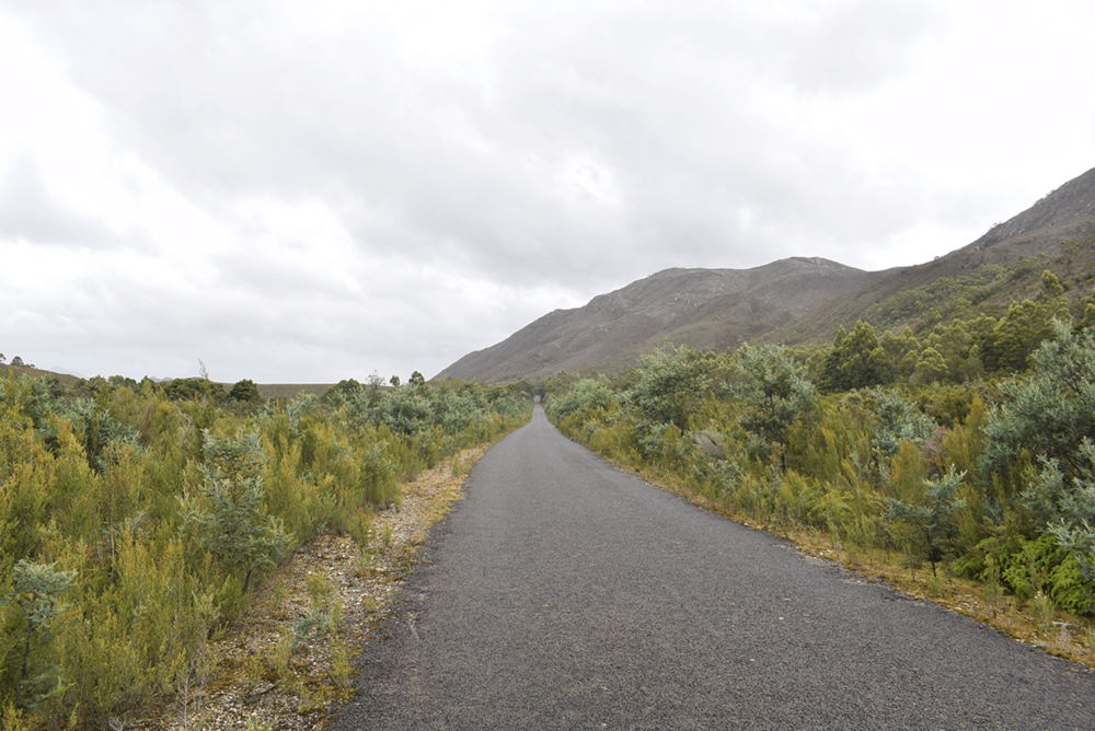 I took this small road diversion towards Lake Burbury camping spot, Reaching there, I didn't find it a comfortable one to put up my tent. I did although, get a nice glimpse of some wildlife on this road.