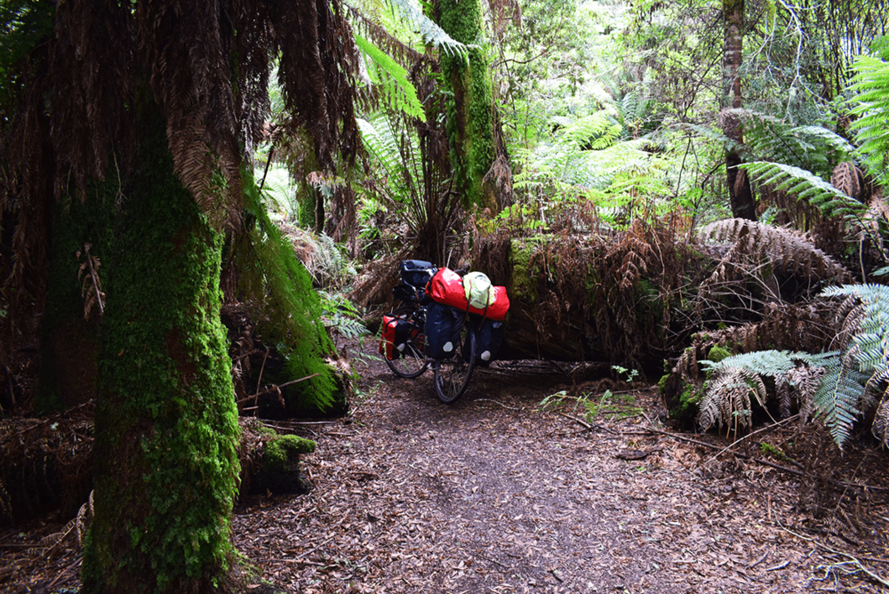 Exploring rainforest with bike.