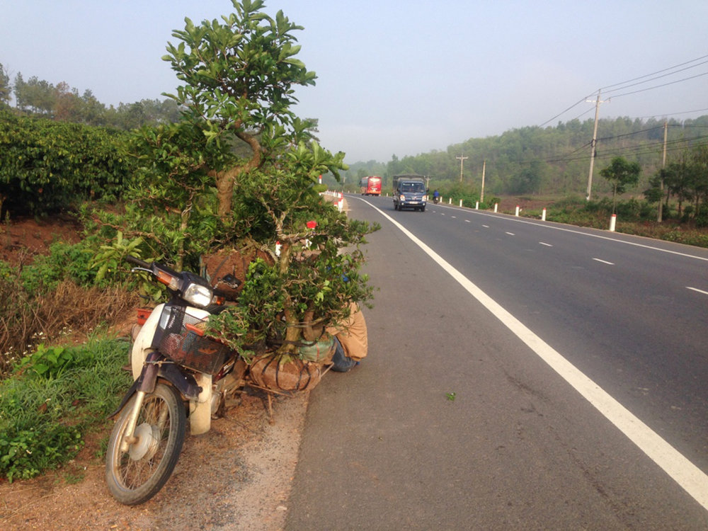 A moped overburdened with plants, trees.