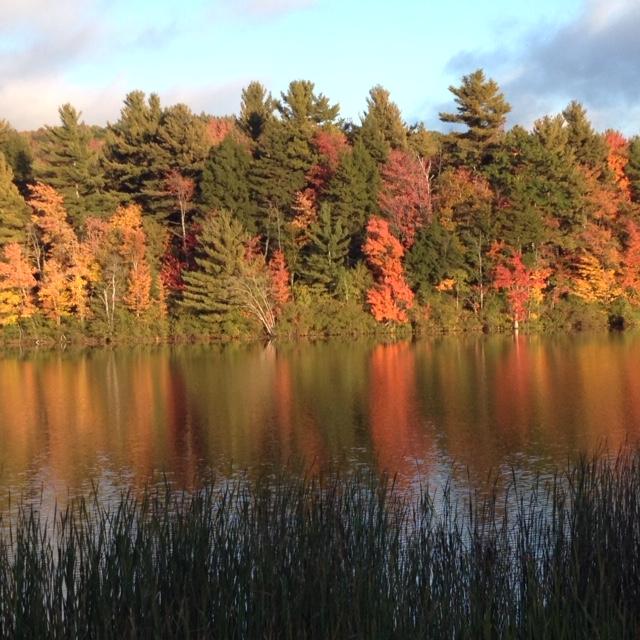 Autumn reflection in water.JPG