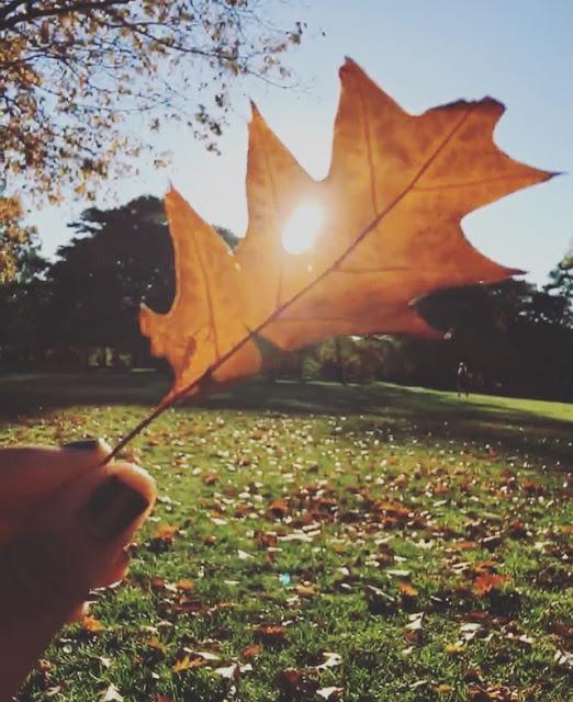 leaf insta.jpg