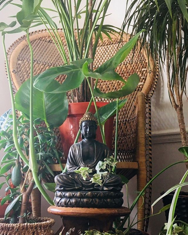 Good morning from my zen jungle. Taking the time to cultivate environments of peace in the corners of my new home, but most importantly, the corners of my mind.✨