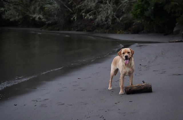 Walks with @hucktheriverdog are the secret sauce to brightening up these moody January days  #truantleatherco #dogsrule #hucktheriverdog #columbiariver #pnwonderdogs #thegreatoutdogs #pnwphotographer #breaktime