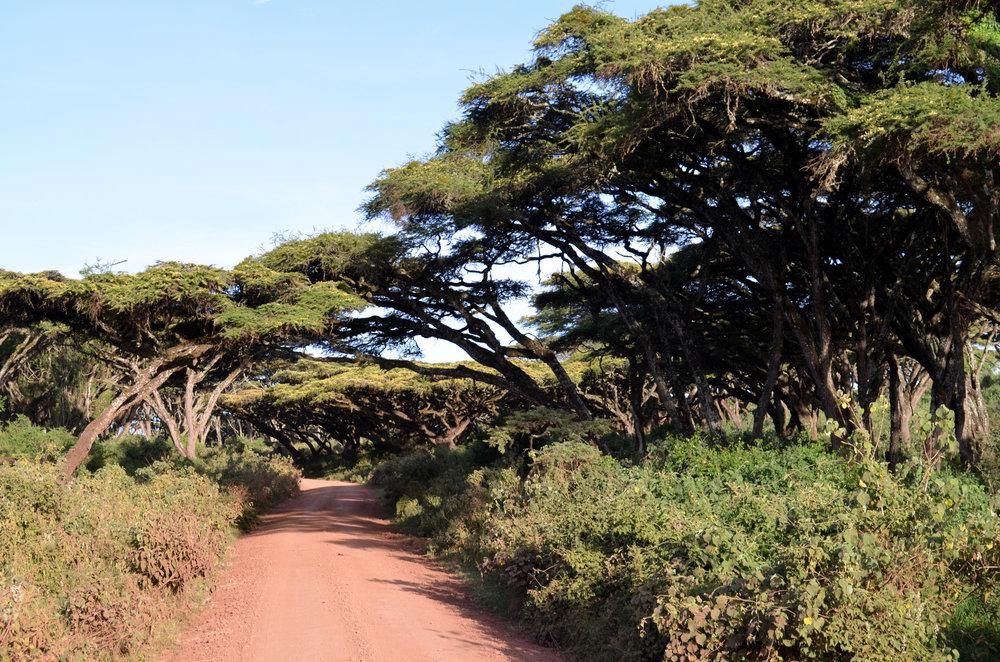 Rim of the Ngorongoro Crater.JPG