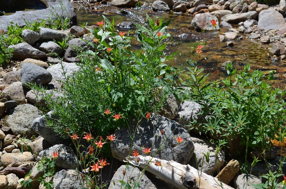 Creek crossing in the Nevada wilderness.JPG