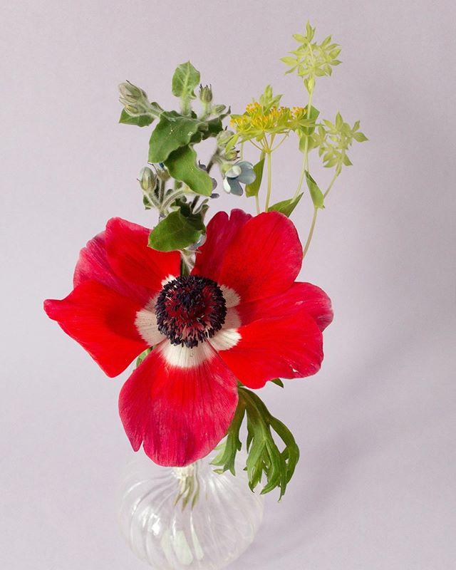 Måndagsbuketten 🌿 • • • #interflora  #theflowereffect #fioribilden #sannegårdensblomsterhall  #göteborgsflorist #mantagervadmanhaver
