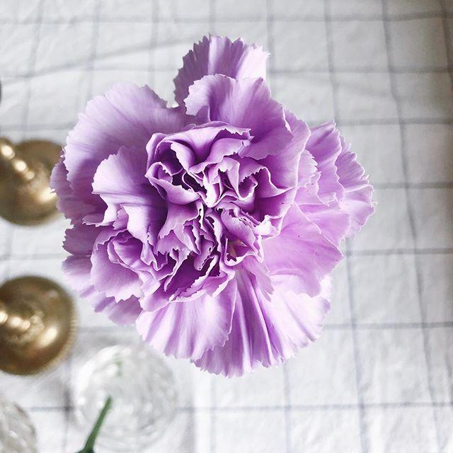 🌟 Lila nejlikor, som en dröm 🥰💜 • • • #interflora  #theflowereffect #fioribilden #sannegårdensblomsterhall  #göteborgsflorist