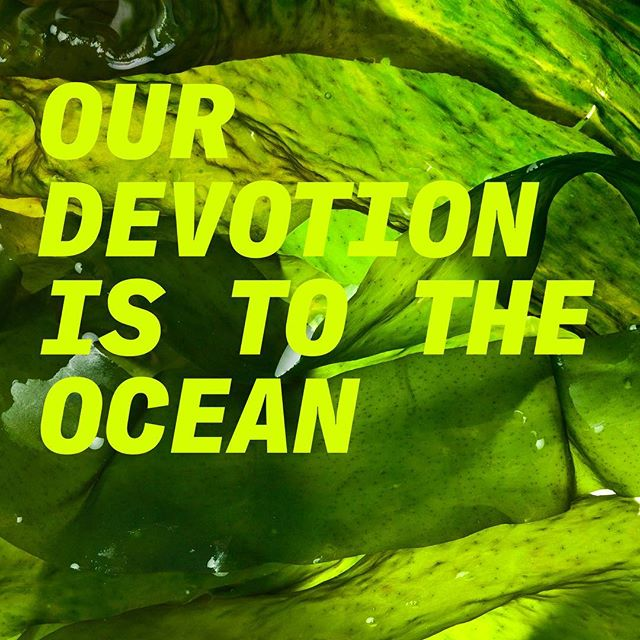 LOLIWARE is made from sustainably-sourced seaweed that is renewable, regenerative, and carbon-sequestering. Nature is pure GENIUS!! We transform this magical sea plant to create the world's leading seaweed-based material technology to replace plastic. Visit our FAQS to learn more about our sourcing, impact, vision, and more. 🌊🌿 LOLIWARE.COM