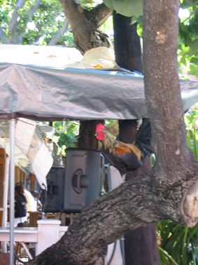 rooster.jpg