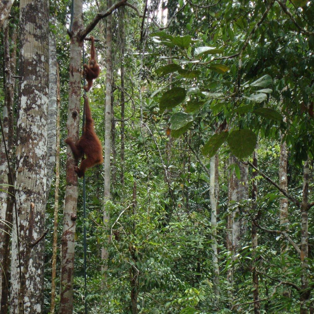 Photo: H.L. Maibom: Borneo 2013