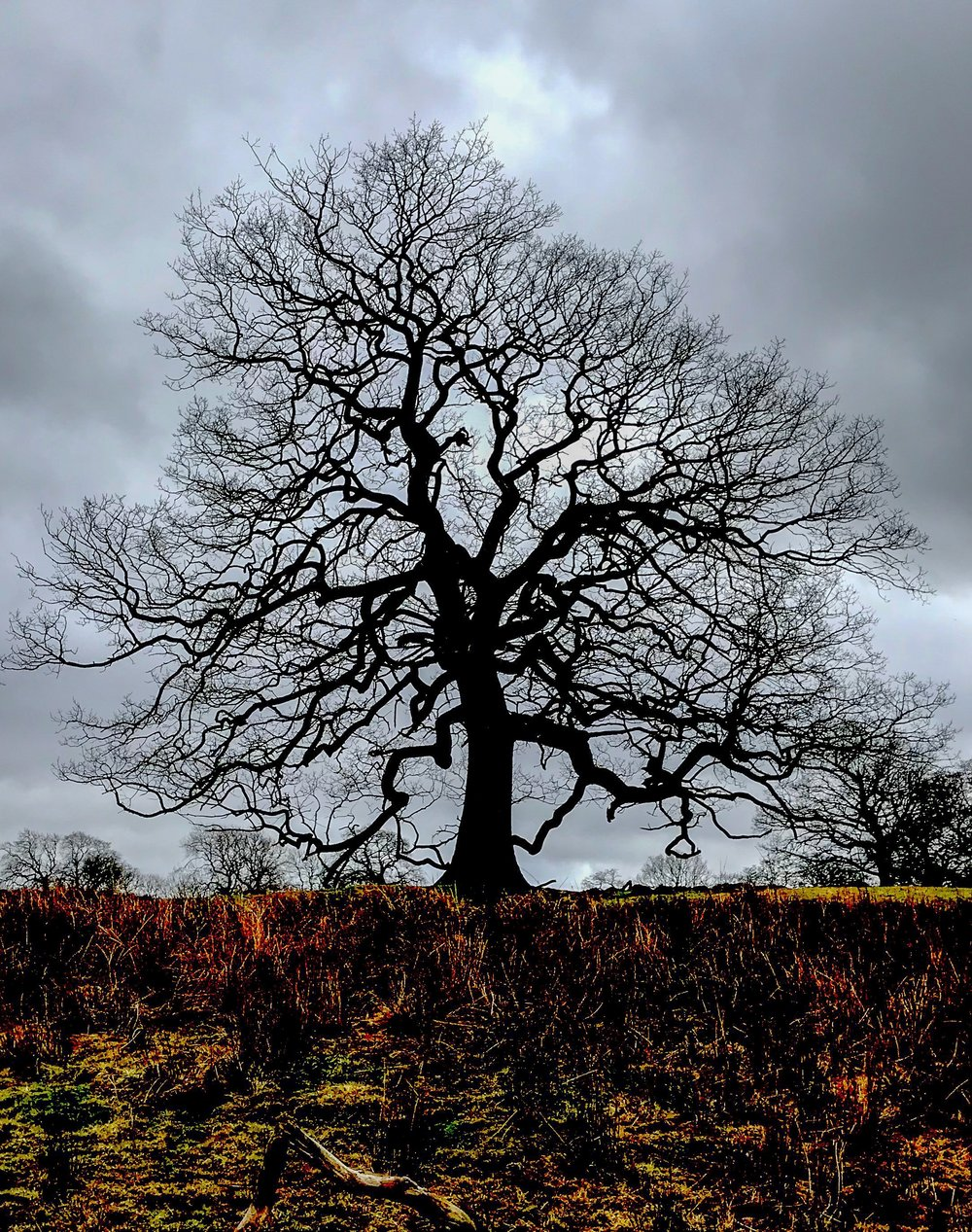 Winter Tree at Fewston Reservoir