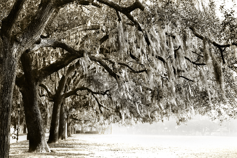 Savannah Trees Waiting Monochrome.jpg