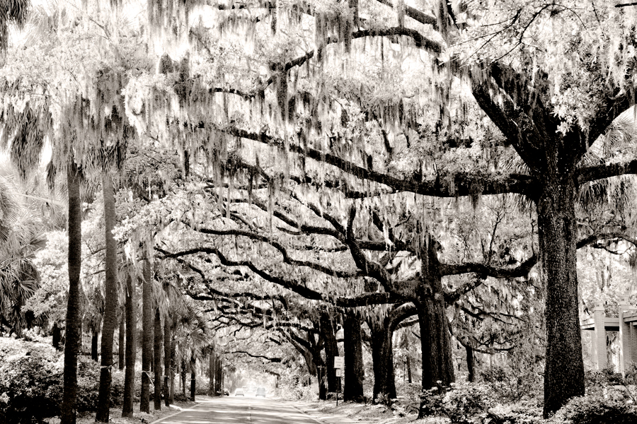Savannah-Canopy-Rev-2-SLE_WEB.jpg