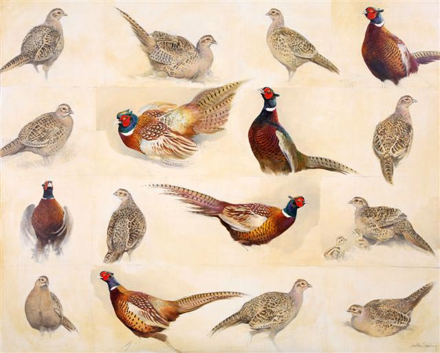 Spring Pheasants Diary - oil 39 x 48 ins