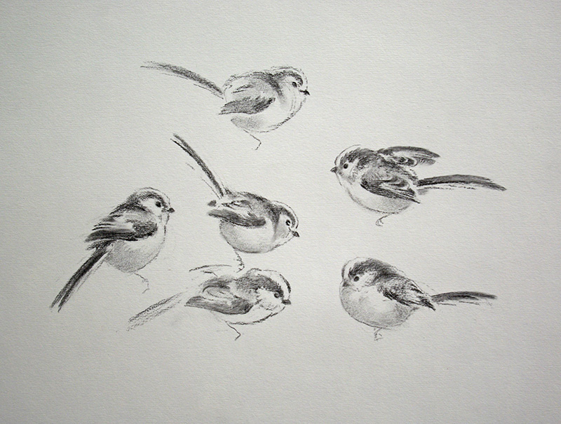 Jonathan Sainsbury, long-tailed tits, charcoal drawing,